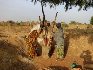 Three women in Niger threshing pearl millet panicles by hand using a large mortar and pestles.
